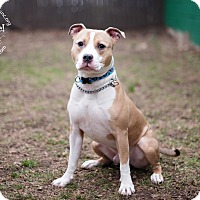 Adopt A Pet :: Odin - New Canaan, CT