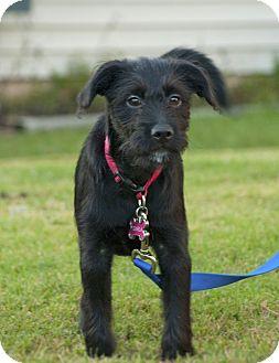 Collie Mix Puppy for adoption in Woodstock, Georgia - Darla