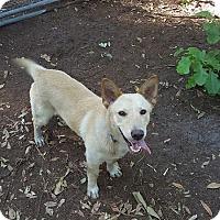 Adopt A Pet :: Brillo - Savannah, GA