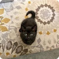 Adopt A Pet :: Nacho - Woodland, CA