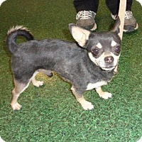 Adopt A Pet :: Kaito - Golden Valley, AZ