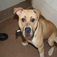 Adopt A Pet :: HUGO - Aurora, IL