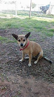 Chihuahua Mix Dog for adoption in Odessa, Texas - Sandy