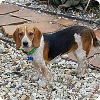 Adopt A Pet :: Velma - El Cajon, CA