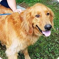 Adopt A Pet :: Gunter - New Canaan, CT