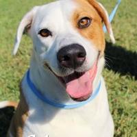 Adopt A Pet :: Murray - Bradenton, FL