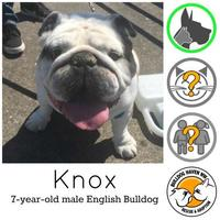 Adopt A Pet :: Knox *PENDING* - Everett, WA