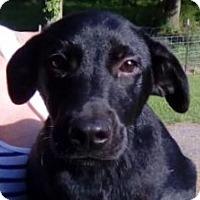 Adopt A Pet :: Elsie - Orlando, FL