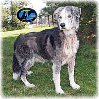 Adopt A Pet :: Wyatt - Howell, MI