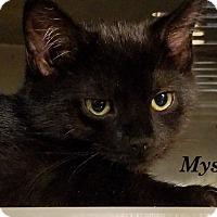 Adopt A Pet :: Mystique - Trevose, PA