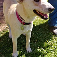 Adopt A Pet :: Nilly - Ogden, UT