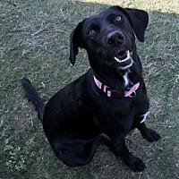 Adopt A Pet :: Jenny Lou - Austin, TX