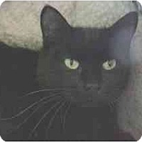 Adopt A Pet :: Karen - Lunenburg, MA