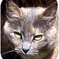 Adopt A Pet :: CLOE - Crescent City, CA
