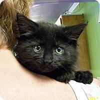 Adopt A Pet :: Swaldo - Dover, OH