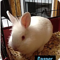 Adopt A Pet :: Casper - Lower Burrell, PA
