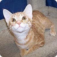 Adopt A Pet :: K-Maddie2-Orange Blossom - Colorado Springs, CO
