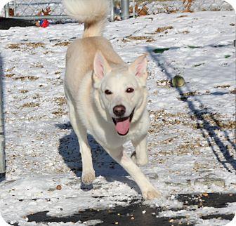 Husky Mix Dog for adoption in Medfield, Massachusetts - Chubbs