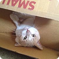 Adopt A Pet :: Thomas - Alexandria, VA