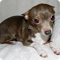Adopt A Pet :: Penelope - Umatilla, FL