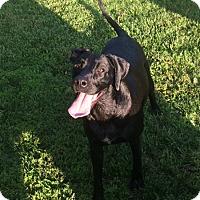Adopt A Pet :: Elsa - Russellville, KY