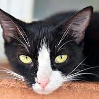 Adopt A Pet :: Bonnie - Vancouver, WA