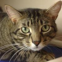 Adopt A Pet :: Roger - Potsdam, NY