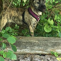 Adopt A Pet :: Jasmine - Hopewell Junction, NY