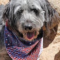 Adopt A Pet :: Luna (PLACED) Adoption_Pending - Glendale, AZ