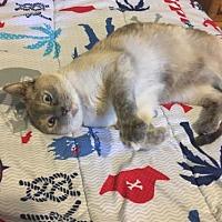 Adopt A Pet :: Chloe - Greeley, CO