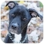 Photo 1 - American Pit Bull Terrier Mix Dog for adoption in Chicago, Illinois - Faith
