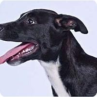 Adopt A Pet :: Specks - Vidor, TX
