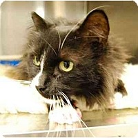 Adopt A Pet :: Mr. Handsome - Modesto, CA