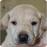Adopt A Pet :: KEITH - Houston, TX