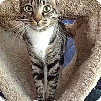 Adopt A Pet :: Dale - Byron Center, MI