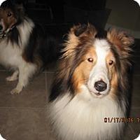 Adopt A Pet :: aska - apache junction, AZ