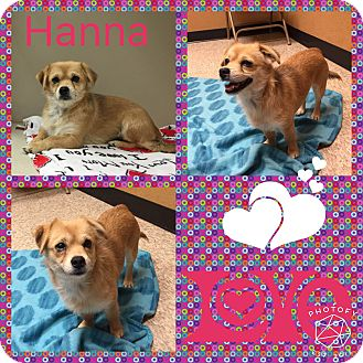Terrier (Unknown Type, Small) Mix Dog for adoption in Snyder, Texas - Hannah