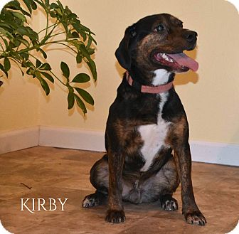 Beagle/Mountain Cur Mix Dog for adoption in Columbia, Tennessee - Kirby