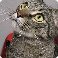 Adopt A Pet :: M E L V I N - Brea, CA