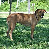 Adopt A Pet :: Millie - Parsons, KS