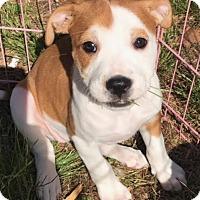 Adopt A Pet :: Growler - Toms River, NJ