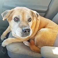 Adopt A Pet :: Bobo - Kingston, TN