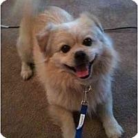 Adopt A Pet :: Kingston - Arlington, TX