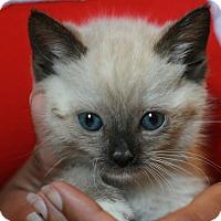Adopt A Pet :: Oishi - Canoga Park, CA