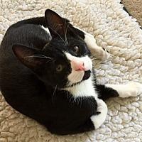 Adopt A Pet :: Finn - Novato, CA