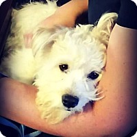 Terrier (Unknown Type, Small) Mix Dog for adoption in Tijeras, New Mexico - Kirby