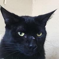 Adopt A Pet :: Luke - Chula Vista, CA