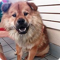 Adopt A Pet :: Scooby - Sacramento, CA