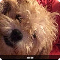 Adopt A Pet :: Jacob - Albemarle, NC