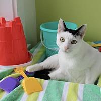 Adopt A Pet :: Lily Pie FE1-9543 - Thibodaux, LA